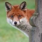 Mozilla: Premium-Version von Firefox kommt im Herbst