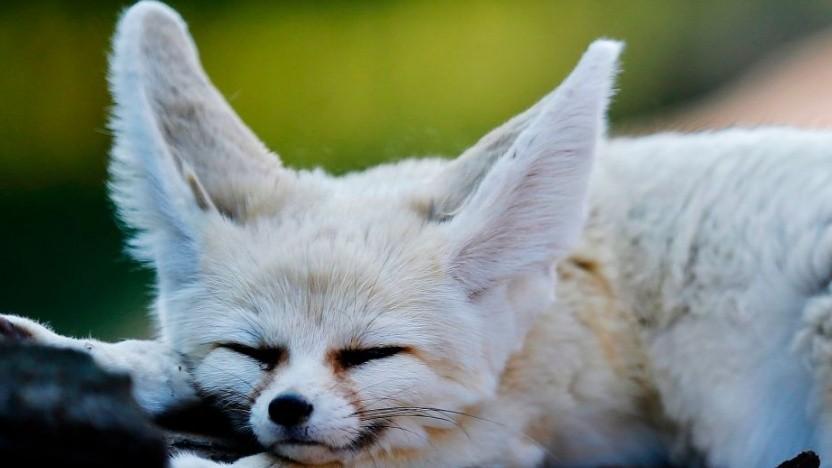 Der Fuchs wird nicht mehr bei allen Firefox-Produkten erkennbar sein.