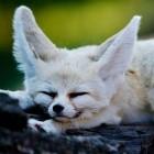 Mozilla: Firefox bekommt mehrere neue Logos