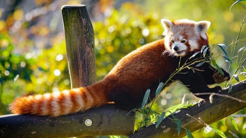 Firefox soll Probleme wie Fake News und toxische Kommentare künftig anders angehen, als diese zu blocken.