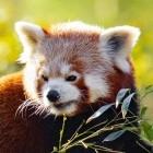 Firefox: Mozilla will Erweiterungen zum Finden glaubwürdiger Inhalte