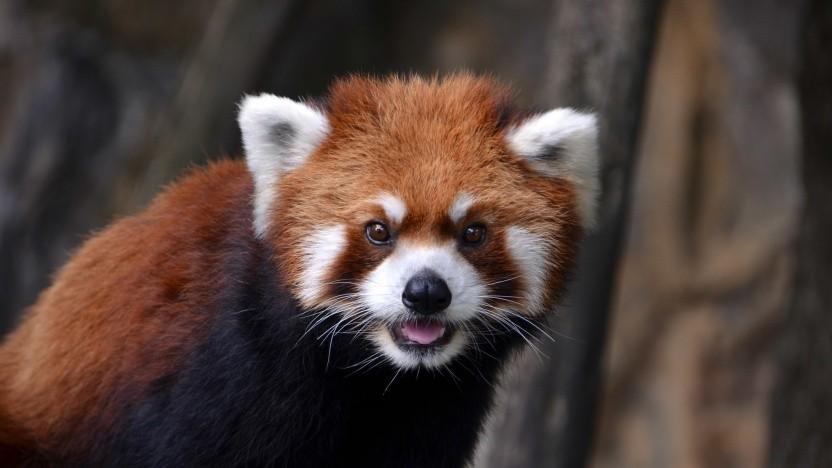 Der Firefox hatte Probleme mit der Software von AVG.