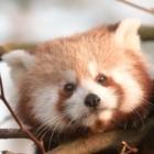 Zero Day: Mozilla schließt ausgenutzte Sicherheitslücke in Firefox