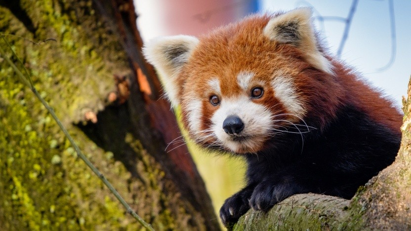 Die Passwortverwaltung im Firefox wird weiter ausgebaut.