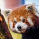Mozilla: Firefox bekommt Passwort-Generator