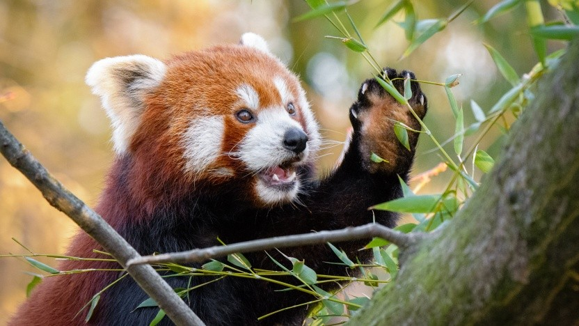 Mozilla hat binnen weniger Tage eine zweite Sicherheitslücke im Firefox geschlossen.