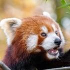 Firefox: Mozilla schließt zweite Zero-Day-Lücke wegen Angriffen