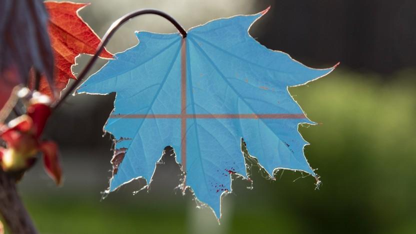 Blätter fallen, Windows 10 19H2 kommt.