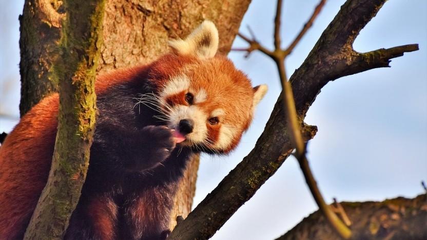 Mozilla hat eine einfache Lösung für die Firefox-Probleme mit Antivirussoftware gefunden.
