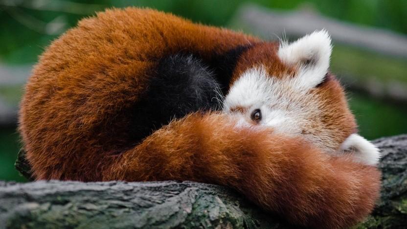 """Die ISPs im UK halten die Firefox-Macher von Mozilla für """"Internetschurken""""."""