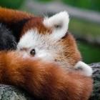 """Vereinigtes Königreich: Provider-Organisation hält Mozilla für """"Internetschurken"""""""