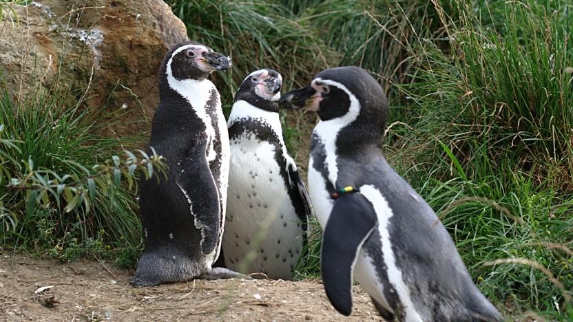 Linux 5.2 ist erschienen.