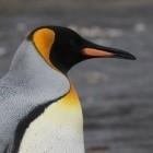 Linux: Kernel-Admin will weg von E-Mails zur Entwicklung
