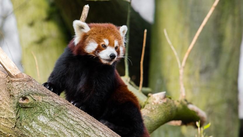 Der Firefox ist in Version 68 verfügbar.