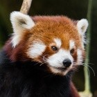 Mozilla: Firefox 68 bringt dunklen Lesemodus und kuratierte Addons