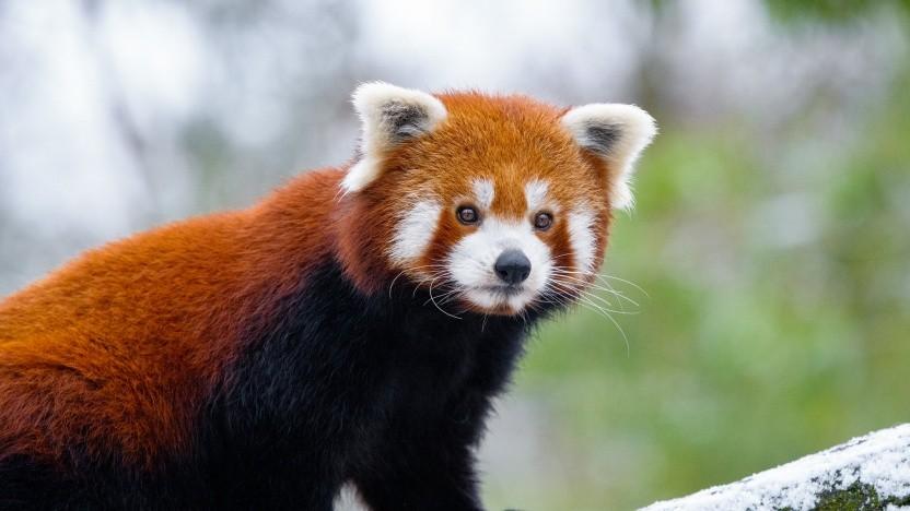 """Doch keine """"Internetschurken"""" - die Firefox-Macher von Mozilla."""