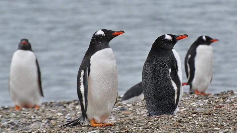 Ob der Exfat-Treiber in den Linux-Kernel kommt, hängt von Microsoft ab.