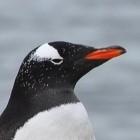 Patente: Microsoft prüft Exfat-Aufnahme in Linux-Kernel