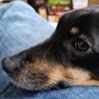 Biometrie: Megvii erkennt den Hund an seiner Nase