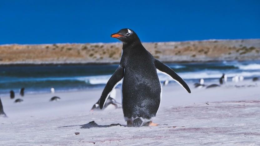 Der Linux-Kernel in Fedora 31 wird nicht mehr auf 32-Bit-x86-CPUs laufen.