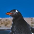 Linux-Distribution: Fedora baut keine Kernel mehr für 32-Bit-x86