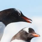 Preempt-RT: Echtzeit-Kernel soll Option für Linux werden