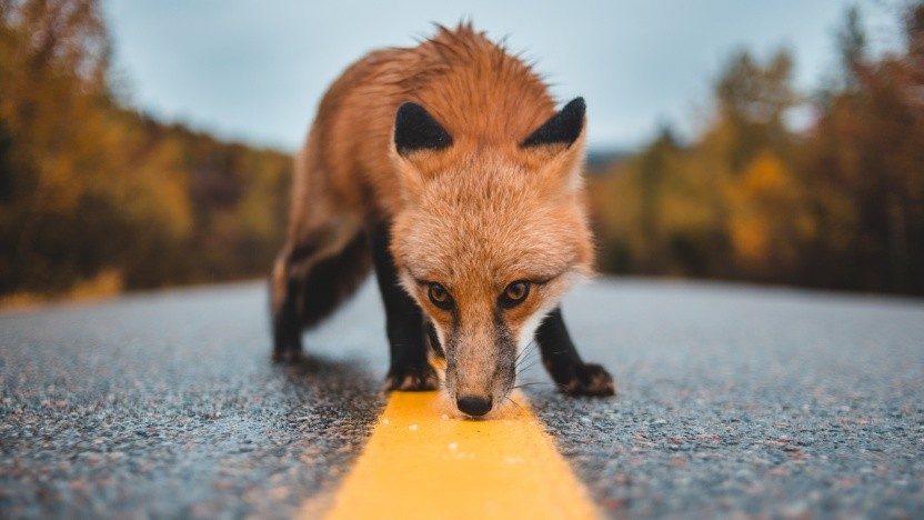 Firefox überprüft Passwörter.