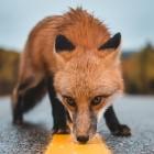 Have I been pwned: Firefox überprüft gespeicherte Zugangsdaten auf Leaks