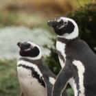 Microsoft: WSL 2 ermöglicht Ausführen eigener Linux-Kernel