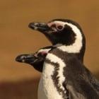 Linuxboot: Linux-Firmware soll Windows starten können