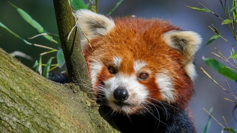 Eine Studie im Firefox-Browser soll verschiedene DNS-Einsatzszenarien untersuchen.