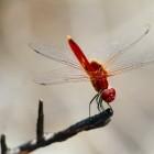 Dragonfly: Neue Sicherheitslücken in Verschlüsselungsstandard WPA3