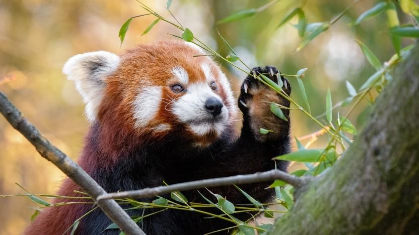 Firefox für Android unterstützt das passwortlose Anmelden - auch per Fingerabdruck.