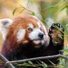 Webauthn: Firefox für Android unterstützt passwortloses Anmelden