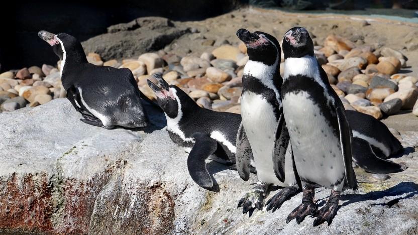 Linux eignet sich für sehr viele Einsatzgebiete, nun also auch als Firmware-Bootloader für Windows.