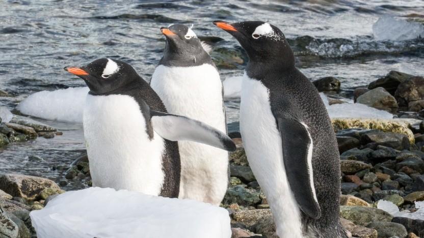 Der Linux-Netzwerkmanager unterstützt Mesh-WLANs, wenn die Hardware das kann.