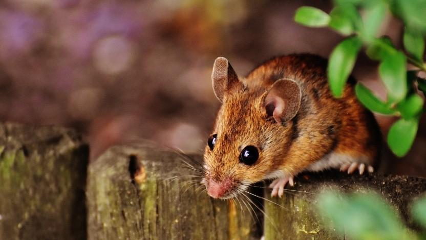Das XFCE-Maskottchen ist eine Maus.