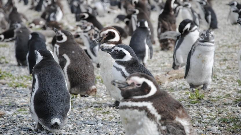 Die Lockdown-Patches für den Linux-Kernel sind nun auf dem langsamen Weg in Richtung Hauptzweig.