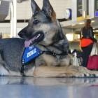 Weichmacher: Handy-Spürhunde werden in Haftanstalten eingesetzt