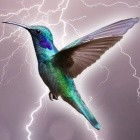 E-Mail-Client: Mozilla veröffentlicht Thunderbird 68.0