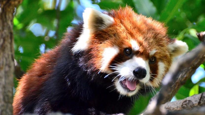 Firefox 69 ist erschienen.