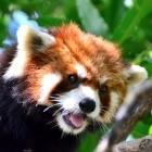 Mozilla: Firefox 69 blockiert Tracking-Cookies und fragt nach Flash