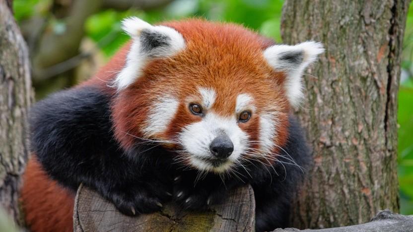 Der Firefox-Browser soll die Funktion für Werbeblocker-Addons erhalten.