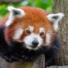 Mozilla: Firefox soll Werbeblocker-APIs weiter unterstützen