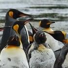 Linux: Kernel-Entwickler patzen bei einfachem Spectre-Fix