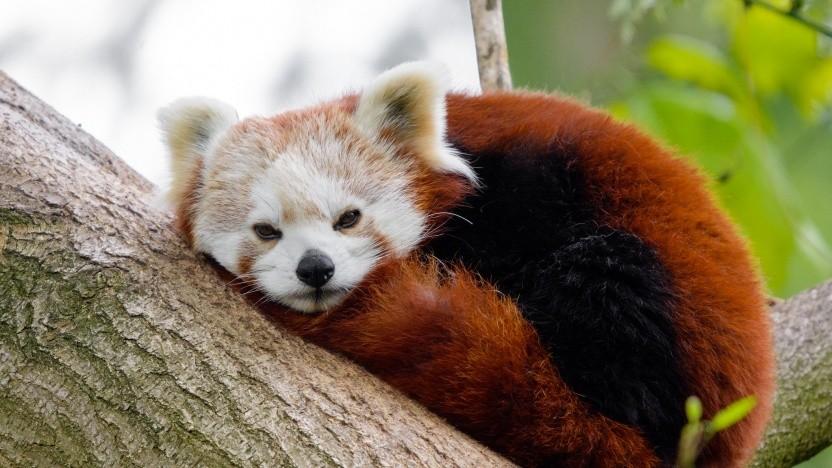 Firefox nutzt in den USA künftig standardmäßig DoH.