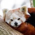 Mozilla: Firefox wird DoH für alle US-Nutzer aktivieren