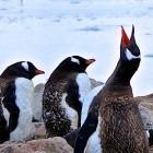 Unternehmens-Chat: Microsoft erstellt Teams-Client für Linux