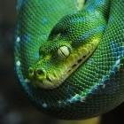 Programmiersprache: Anfang 2020 ist endgültig Schluss für Python 2