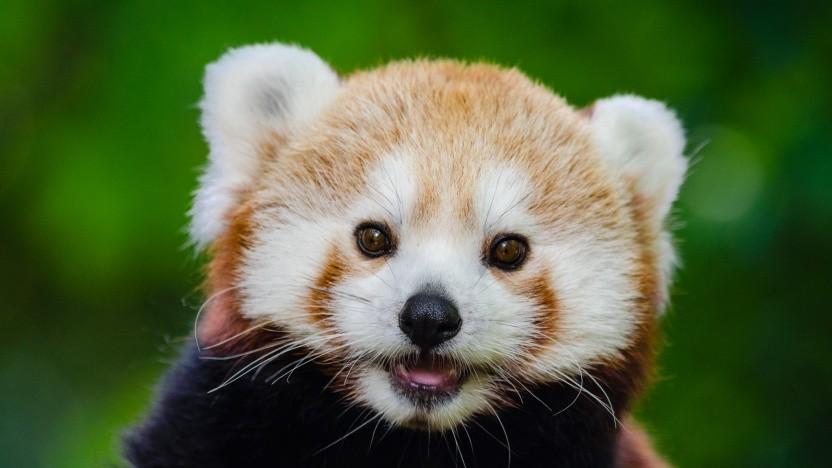 Für Firefox gibt es jetzt auch Enterprise-Support.